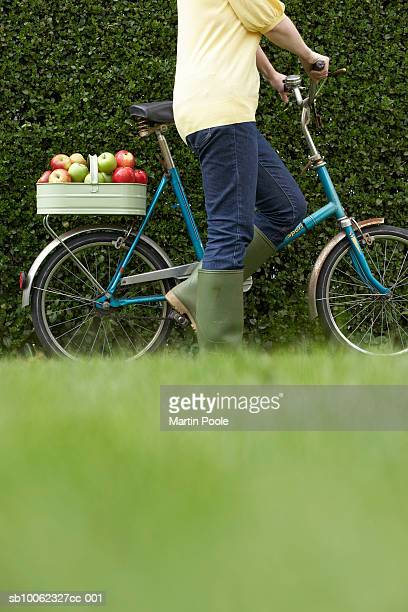 Unrecognizable person walking bicycle with basket of apples along hedge, low section