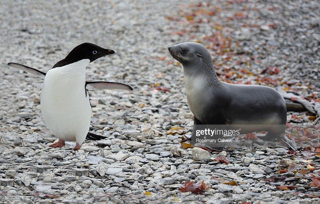 Unusual Animal Pairs