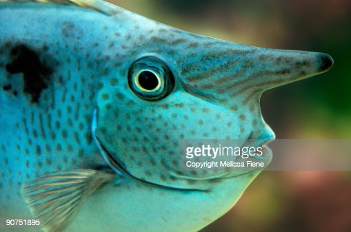 Unusual Fish Stock Photo Getty Images