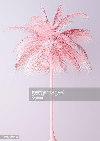 Unusual Pastel Pink Palm : Foto de stock