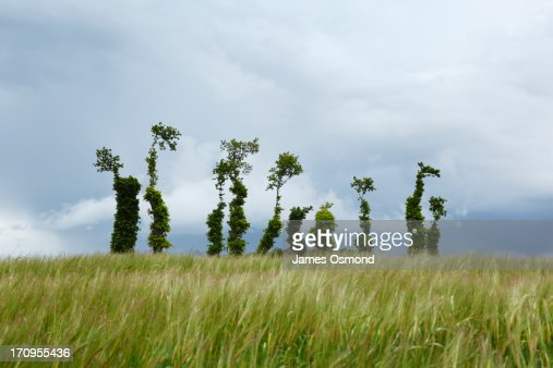 unusually shaped trees that look like letters stock photo