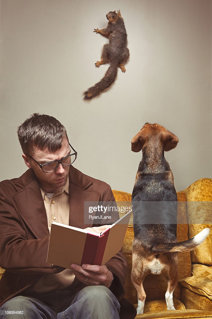 Unwelcome Intruder Squirrel : Stock Photo