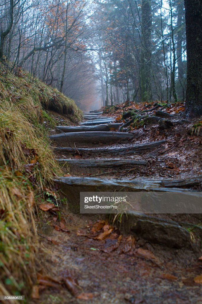 Up the Trail's Steps : Stockfoto