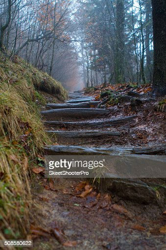 Up the Trail's Steps : Stock Photo