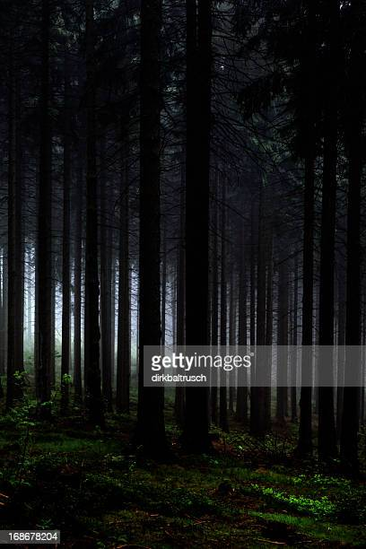 Venir nuit dans la forêt.