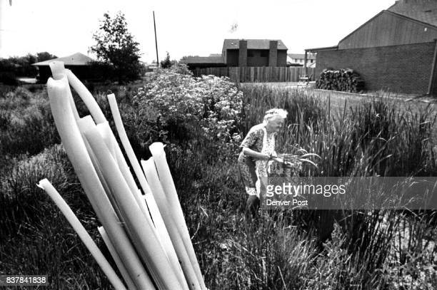 Upended white part of cattail stalks foreground will be fine in salad Mrs Irene Wheeler says Credit Denver Post