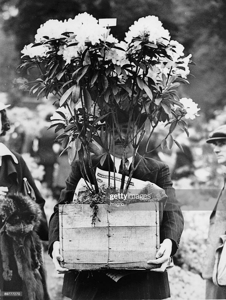 Upon completion of the flower exhibition in Chelsea millions of flowers were given away - no disposal costs. Picture: A man is carrying flowers. England. Photograph. Around 1930.