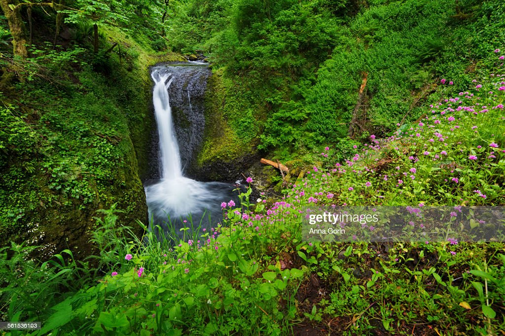 Upper Oneonta Falls and spring wildflowers, Oregon