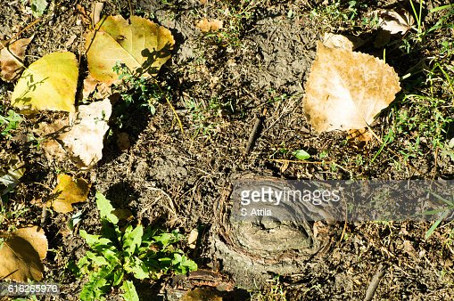 Upper view of yellow leaves and tree root : Stock Photo