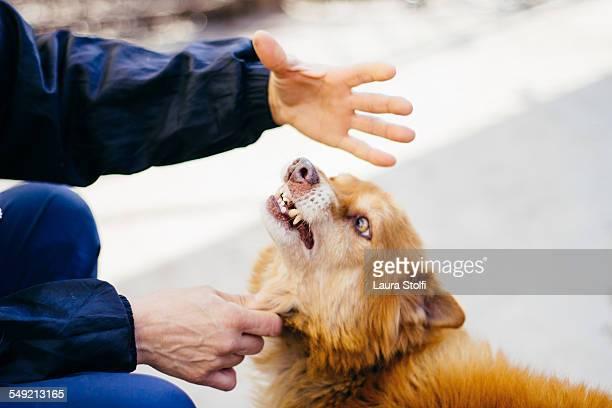 Upset dog smirks & shows teeth to woman