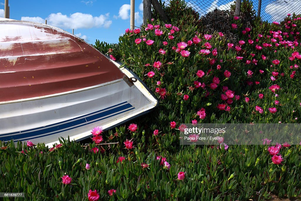 Upside Down Boat In A Garden With Pink Flowers