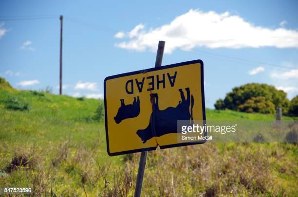 Upside down Cattle Ahead warning road sign, near Bellingen, New South Wales, Australia