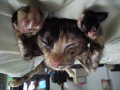 Upside Down Image Of Cat Sleeping On Bed At Home