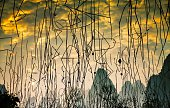 Upside Down Image Of Twigs Reflecting In Lake During Sunset