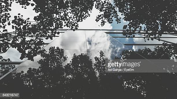 Upward View Of Glass Building Reflecting Clouds, And Trees