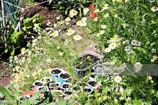 Urban comunity garden