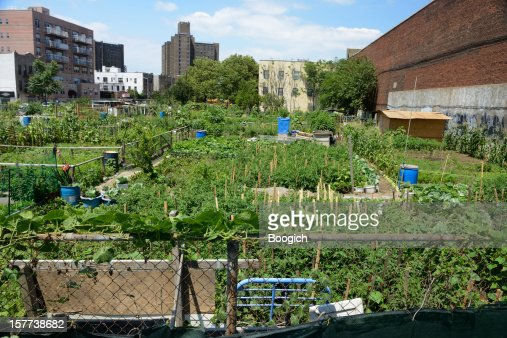 Urban farm plot in Coney Island, New York
