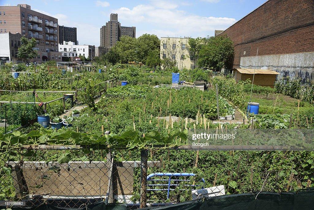 Urban Farming in Coney Island