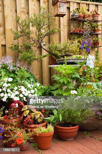 Urban Garden Series