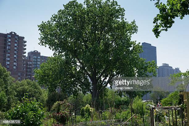 Urban garden with Manhattan buildings on Roosevelt Island in the Manhattan borough of New York New York USA