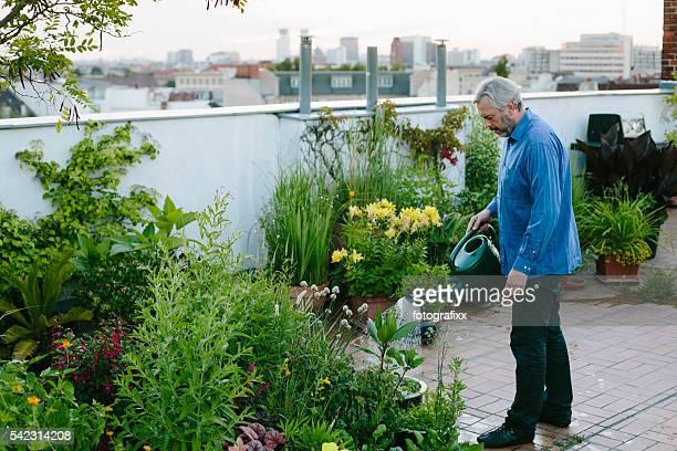 Giardinaggio urbano: Uomo si diffonde sue piante su giardino sul tetto