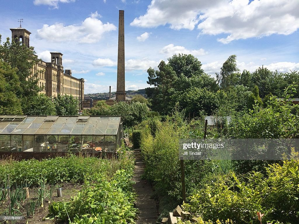 Urban gardening opposite the Salts Mill building at Caroline Street allotments, Saltaire, West Yorkshire, UK