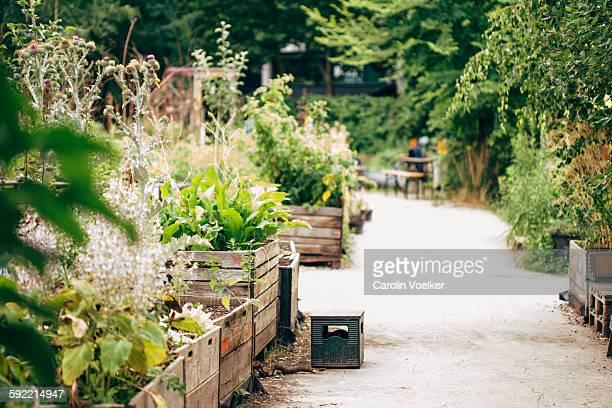 Urban gardening project