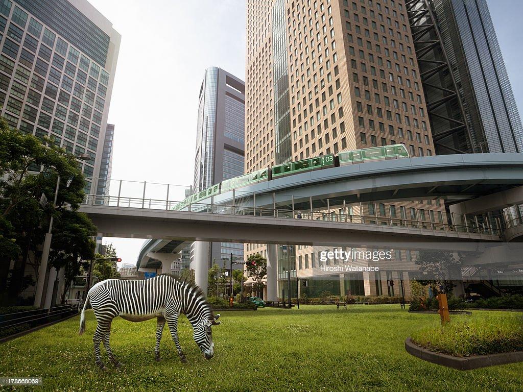 Urban greening plan : Stock Photo