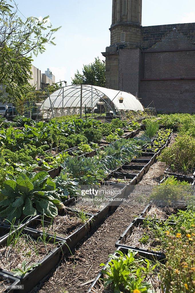 Urban Organic Community Garden : Foto de stock