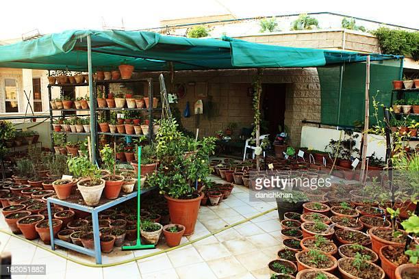 Urbaine, bio de légumes et des herbes dans le jardin, balcon
