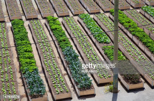 Urban Organic Vegetable Garden Stock Photo Getty Images