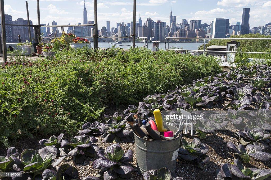 Urban rooftop farm in Brooklyn, New York