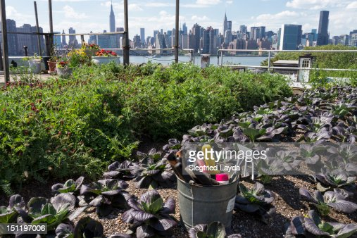 Urban rooftop farm in Brooklyn, New York
