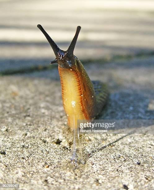 Urban Slug