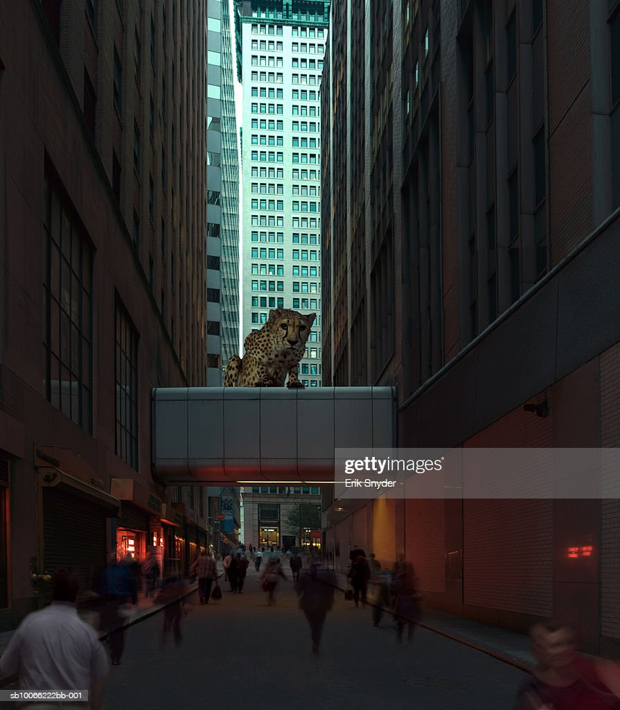 Urban street with pedestrians and cheetah on walkway (Digital Composite) : Stock Photo