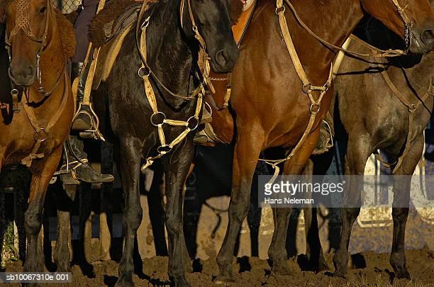 Uruguay, Montevideo, horses