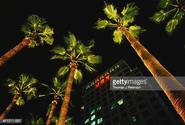 USA,California,San Jose,palm trees at night below Christmas message