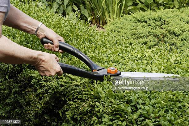 Hedge gardening stock photos and pictures getty images for Electric hand garden shears