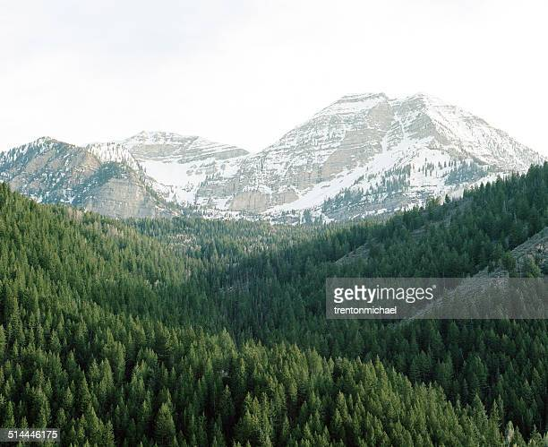 'USA, Utah, American Fork Canyon, Spring evening looking towards Mt. Timpanogos'