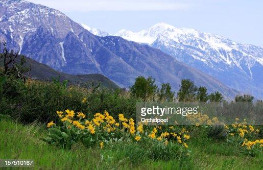 Utah Meadows and Snow Peaks
