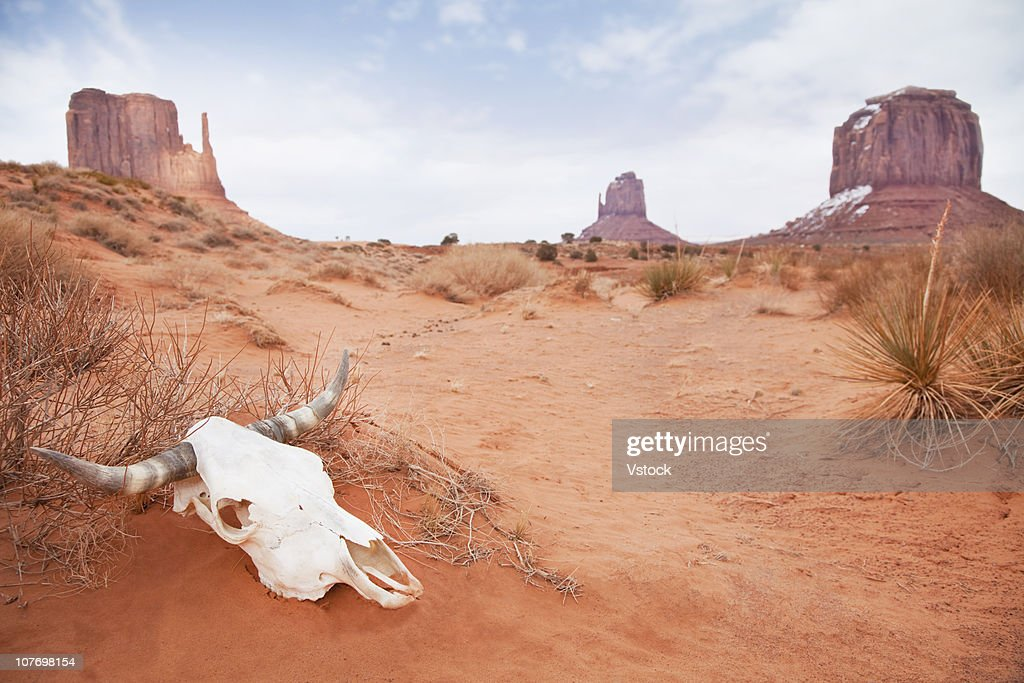 USA, Utah, Monument Valley, Animal skull in desert