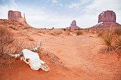 USA, Utah, Monument Valley, Animal skull in desert