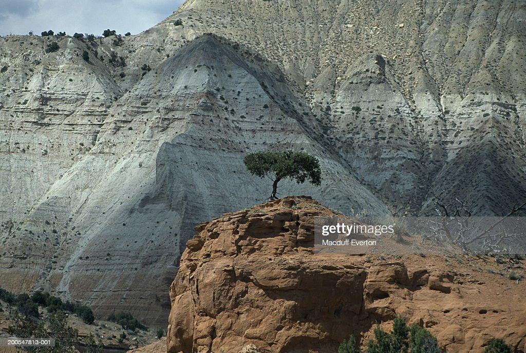 USA, Utah, near Bryce Canyon, Kodachrome Basin State Park, Kodachrome Basin : Stock Photo