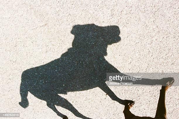 USA, Utah, Salt Lake City, Shadow of dog