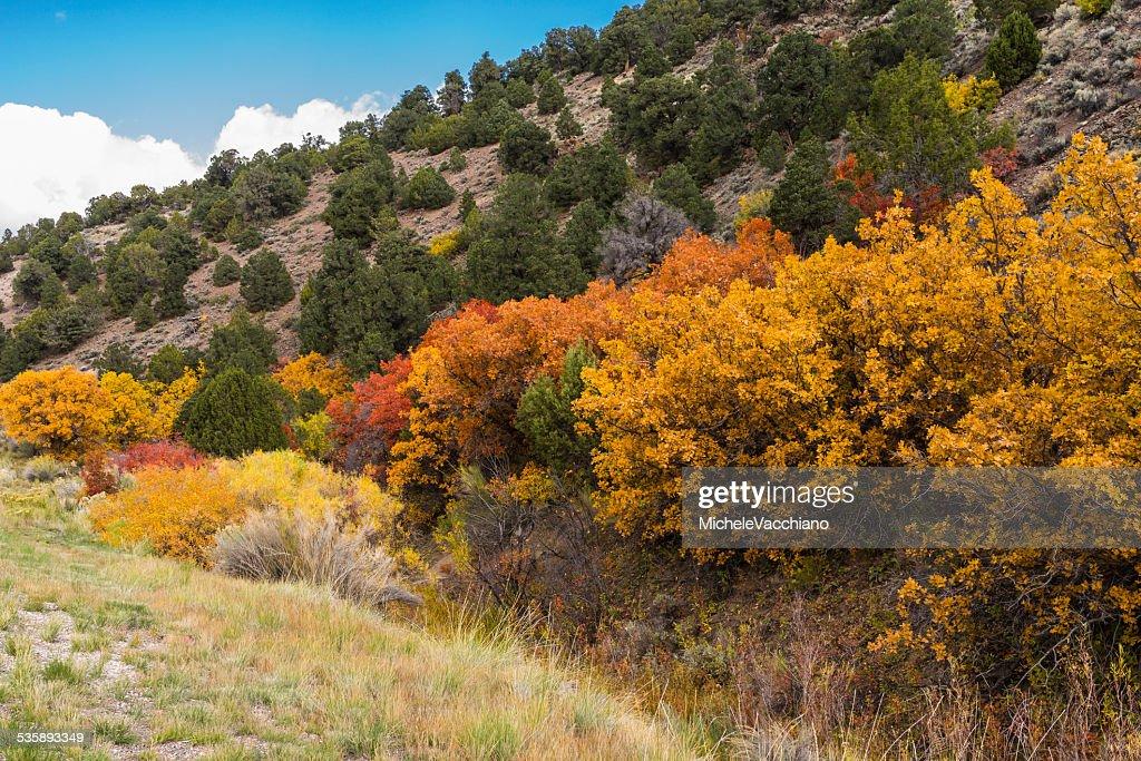 Utah. Vegetation auf dem State Highway 24 zwischen Salina und Loa : Stock-Foto