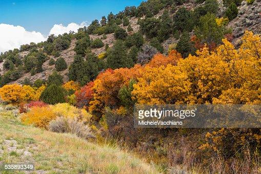 L'Utah. Végétation luxuriante le long de l'autoroute 24 entre Salina et Loa : Photo