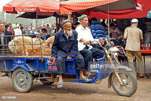 Uyghur farmers with motorized cart loaded with sheep at the cattle market in Kashgar / Kashi Xinjiang China