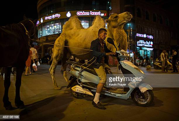 Uyghur man rides a scooter as he pulls his camel and horse on August 2 2014 in Kashgar Xinjiang Uyghur Autonomous Region China Nearly 100 people have...