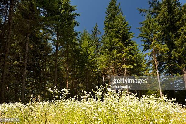 Unbebautes Grundstück auf bewaldeten Land