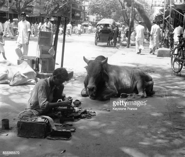 Vache sacrée dans les rues du vieux Delhi Inde en 1967